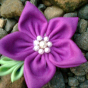 pimpernel purple