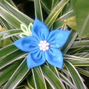 Pimpernel Blue