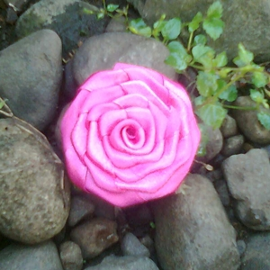 dark pink rose, bros dari pita