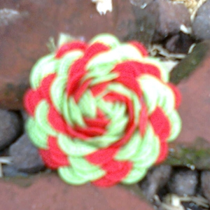 red bellis green